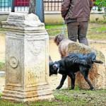 perros_parque